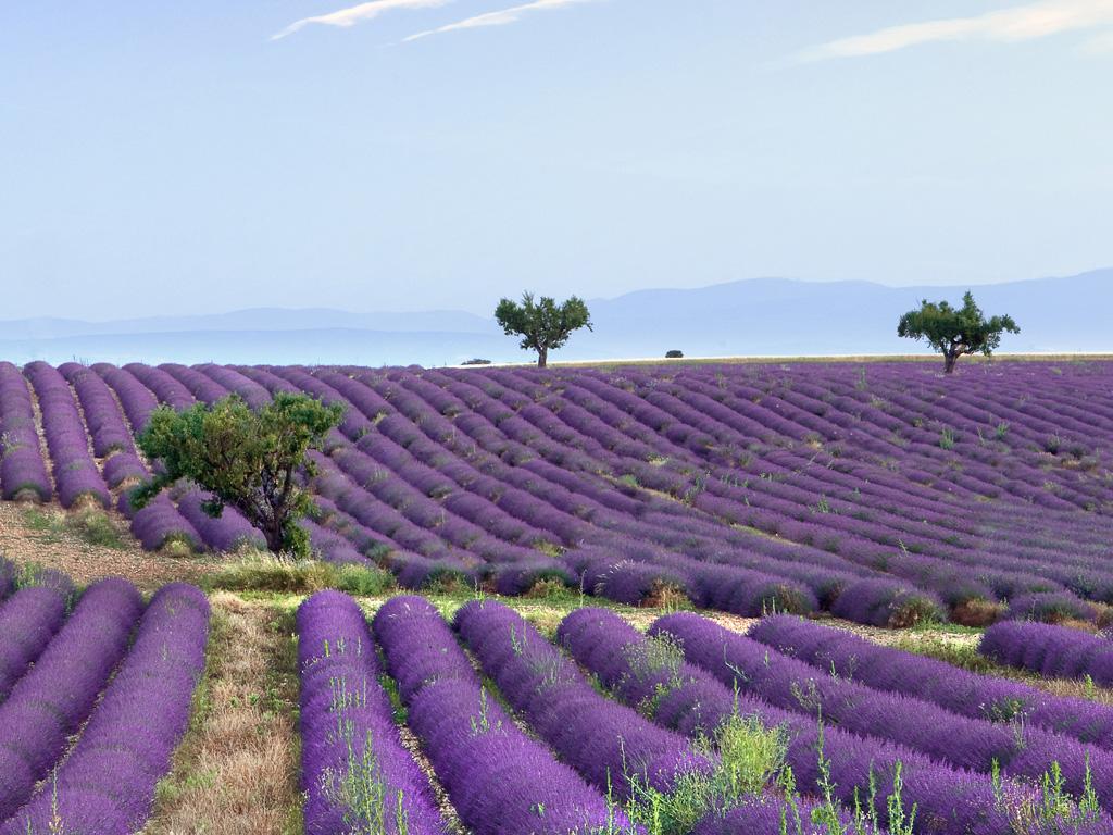 Lavender Hotel Spa